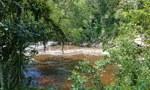 Como quilombolas podem proteger a floresta